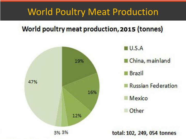 World poultry meat production