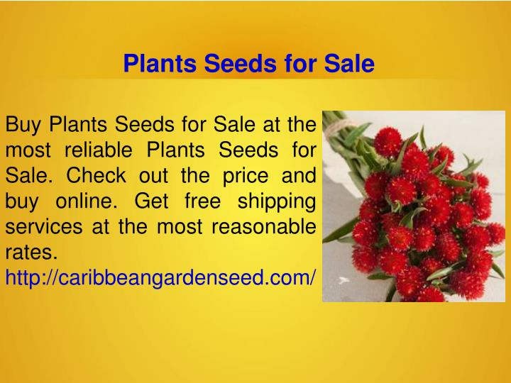 Plants Seeds for Sale