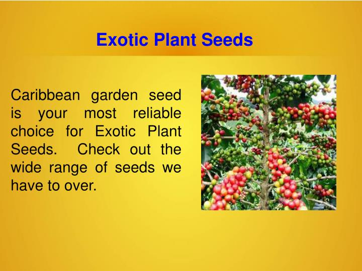 Exotic Plant Seeds