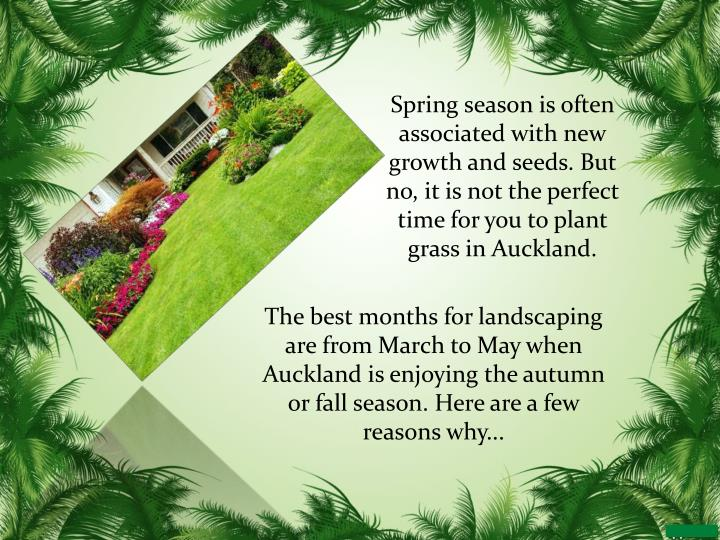 Spring season is often associated with new growth and seeds. But no, it is not the perfect time for you to plant grass in Auckland.
