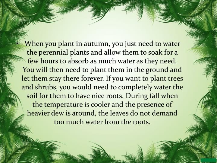 When you plant in autumn, you just need to water the perennial plants and allow them to soak for a few hours to absorb as much water as they need. You will then need to plant them in the ground and let them stay there forever. If you want to plant trees and shrubs, you would need to completely water the soil for them to have nice roots. During fall when the temperature is cooler and the presence of heavier dew is around, the leaves do not demand too much water from the roots.