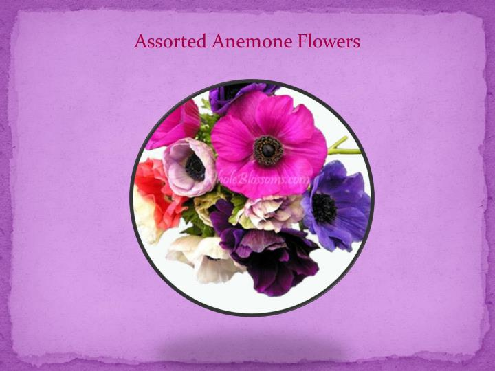 Assorted Anemone Flowers