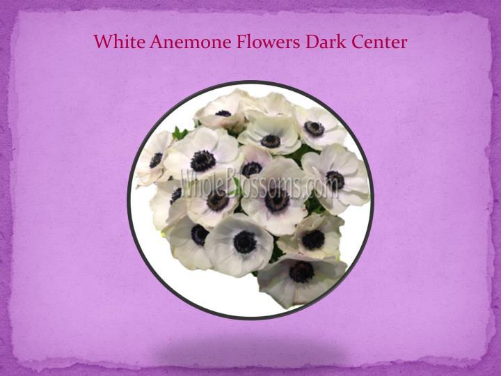 White Anemone Flowers Dark