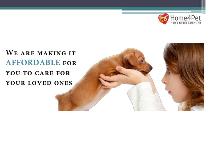 Pet food accessories and services home4pet 7449661