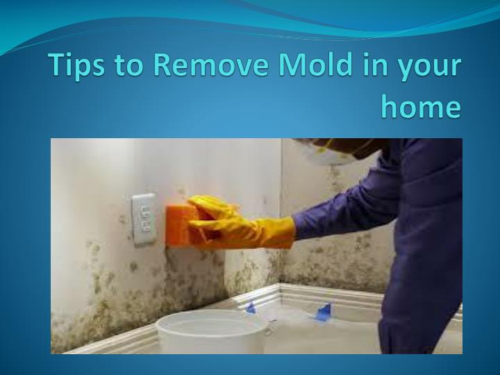 Tips to remove mold in your home