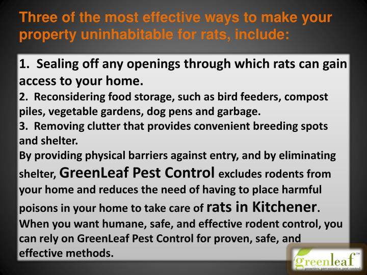 Three of the most effective ways to make your property uninhabitable for rats, include: