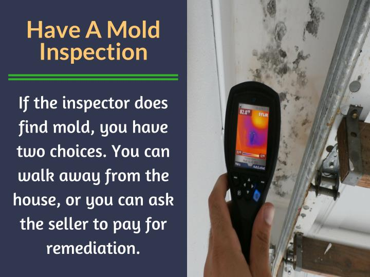 Have A Mold