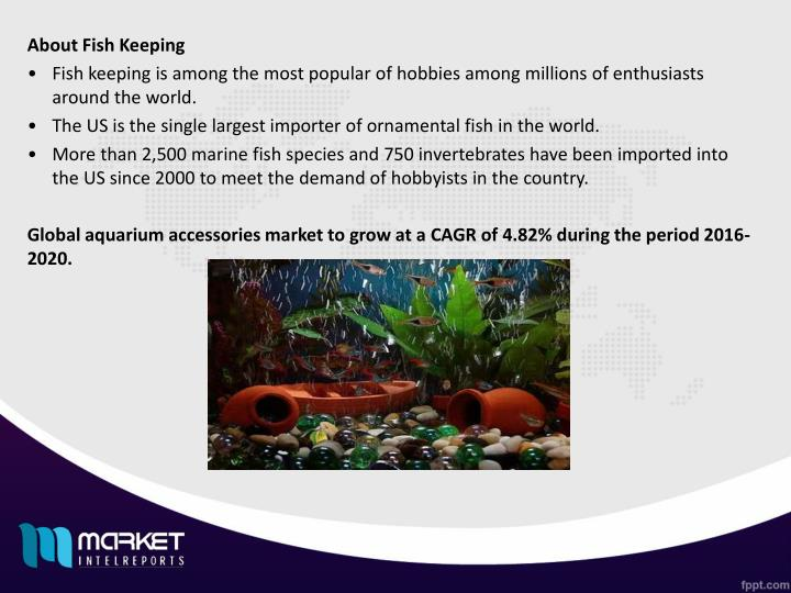 About Fish Keeping