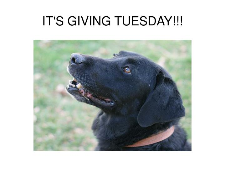 It s giving tuesday