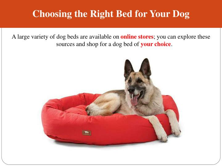 Ppt buy raised and large dog beds from credible online stores powerpoint presentation id 7458808 - Picking the right matress ...