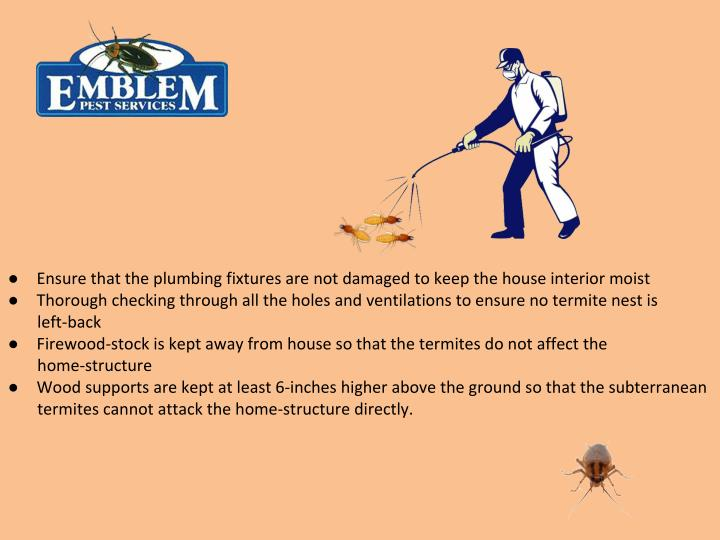 Image Result For Remove Termites Naturally