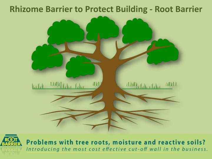 rhizome barrier to protect building root barrier n.