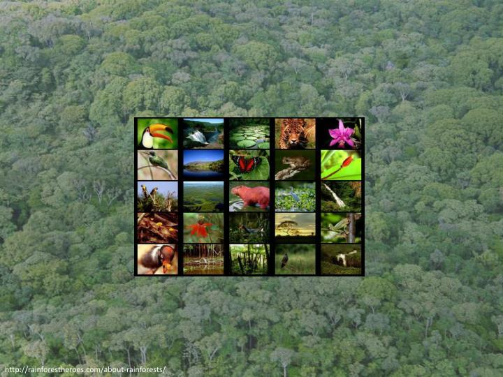 Http rainforestheroes com about rainforests