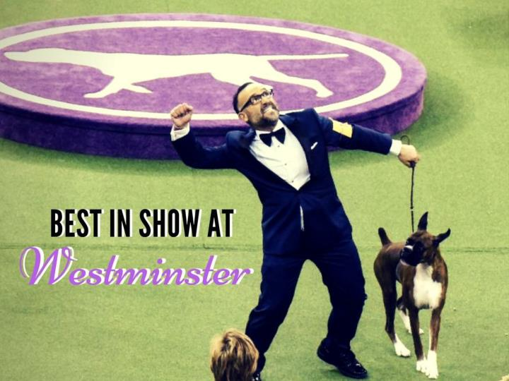 best in show at westminster n.
