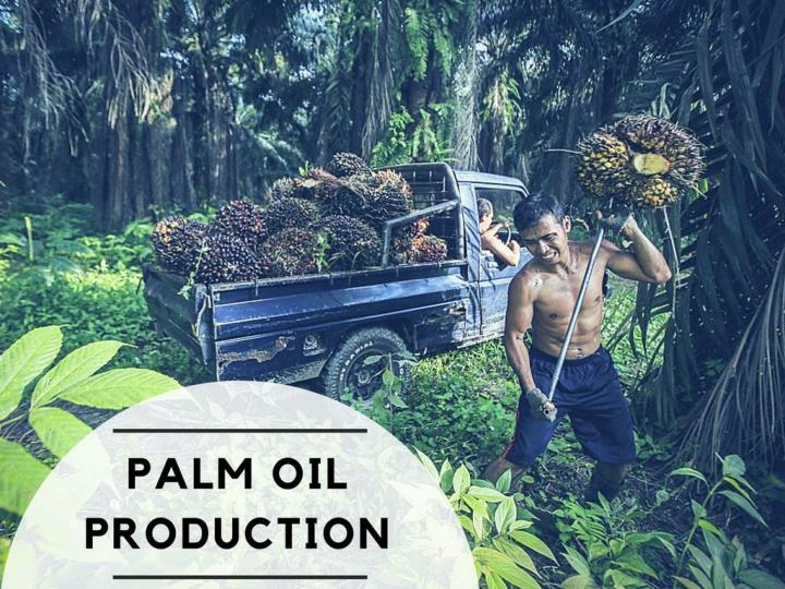 palm oil production n.