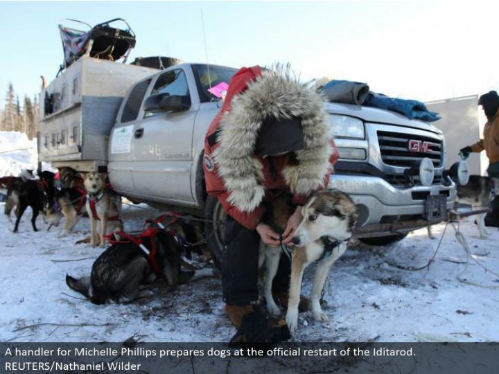 A handler for Michelle Phillips gets ready pooches at the authority restart of the Iditarod. REUTERS/Nathaniel Wilder