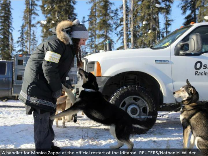 A handler for Monica Zappa at the authority restart of the Iditarod. REUTERS/Nathaniel Wilder