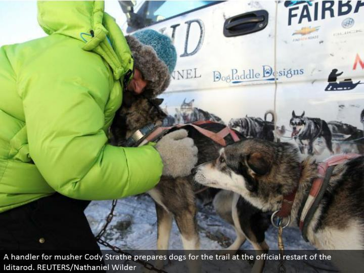 A handler for musher Cody Strathe gets ready puppies for the trail at the authority restart of the Iditarod. REUTERS/Nathaniel Wilder
