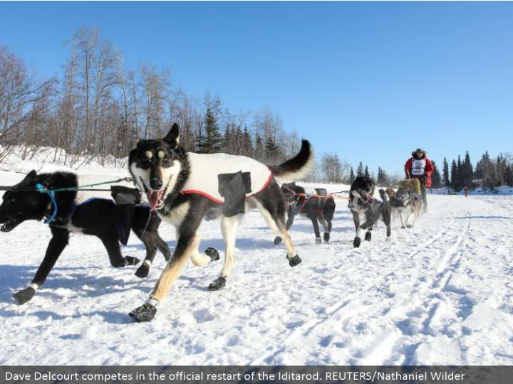 Dave Delcourt contends in the authority restart of the Iditarod. REUTERS/Nathaniel Wilder