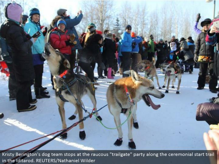 "Kristy Berington's canine group stops at the rambunctious ""trailgate"" party along the stately begin trail in the Iditarod. REUTERS/Nathaniel Wilder"