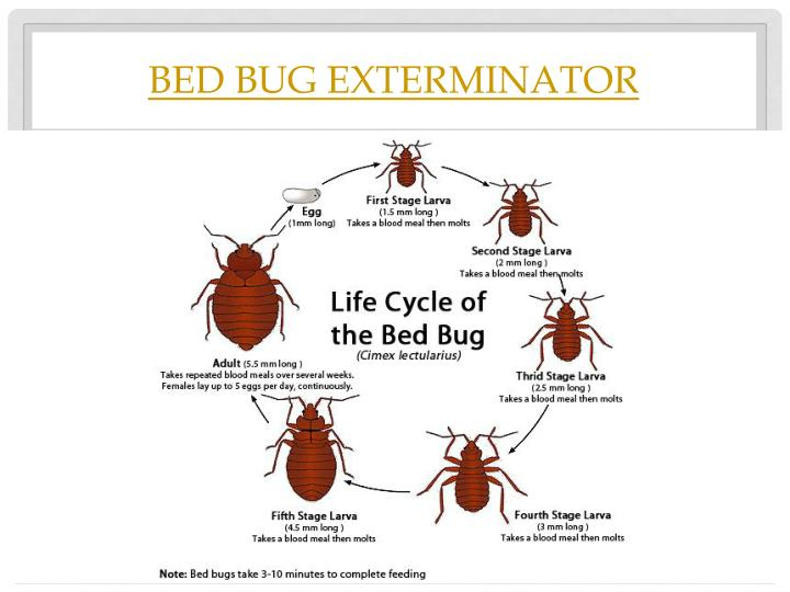 How To Kill Bed Bugs In Bed Frame