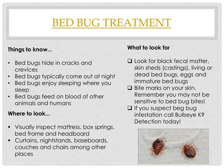 Bed Bug Treatment Dfw