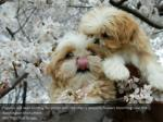 puppies are seen holding for photo with