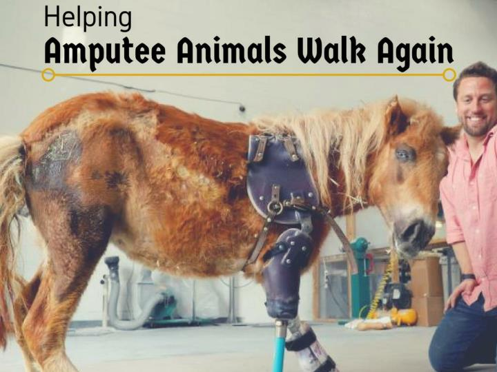 helping amputee animals walk again n.