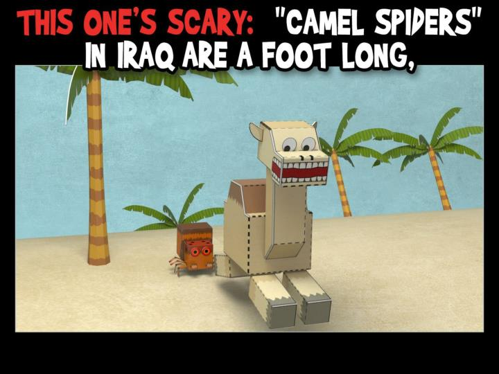 """This one's scary:  """"Camel spiders"""" in Iraq are a foot long,"""