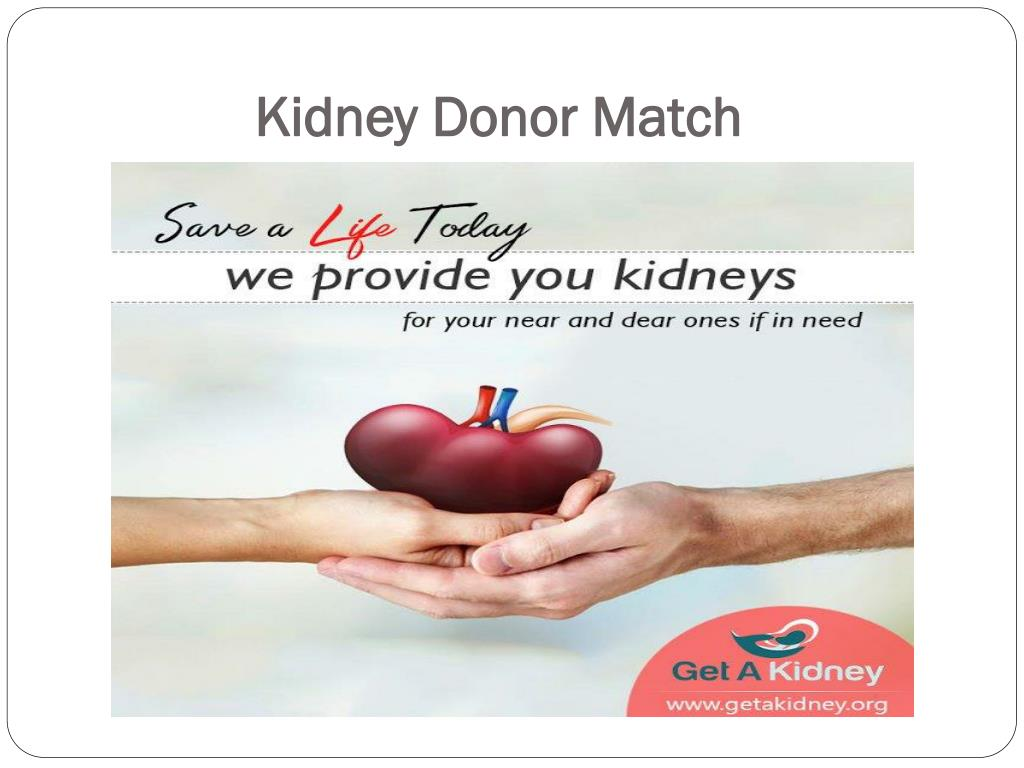 PPT - Kidney Transplant Donor PowerPoint Presentation - ID:7550064