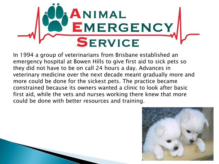 in 1994 a group of veterinarians from brisbane n.