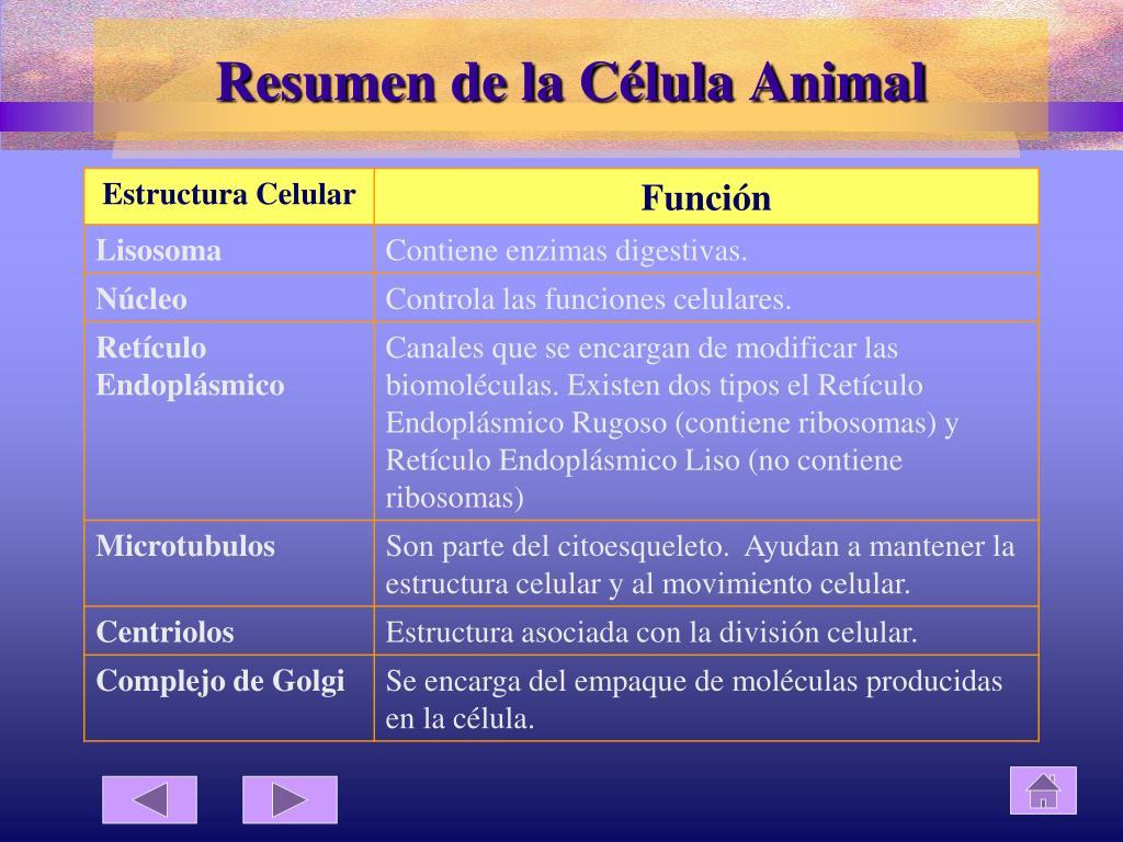 Ppt La Celula Powerpoint Presentation Free Download Id