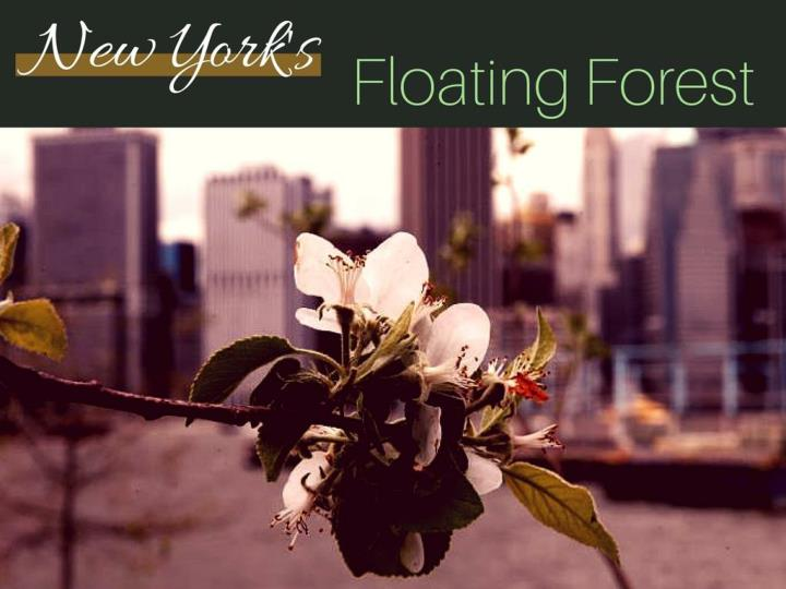 new york s floating forest n.