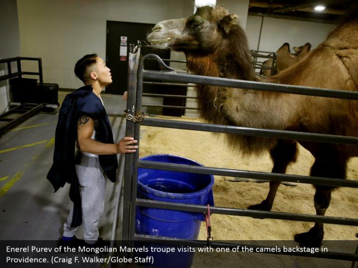 Enerel Purev of the Mongolian Marvels troupe visits with one of the camels backstage in Providence. (Craig F. Walker/Globe Staff)