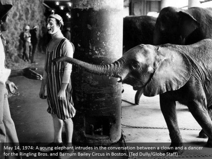 May 14, 1974: A young elephant intrudes in the conversation between a clown and a dancer for the Ringling Bros. and Barnum Bailey Circus in Boston. (Ted Dully/Globe Staff)