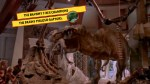 the brawny t rex champions the brainy philoso