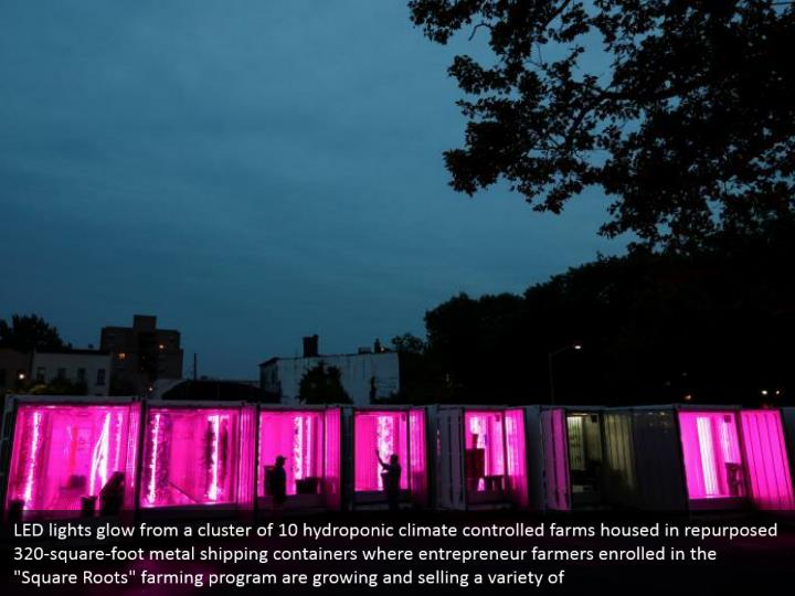 Led lights glow from a cluster of 10 hydroponic