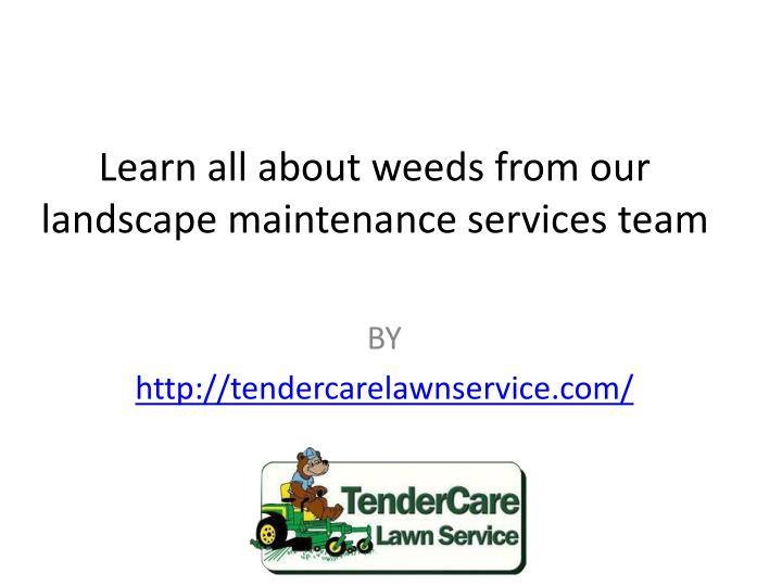 learn all about weeds from our landscape maintenance services team n.