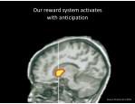ourrewardsystemactivates withanticipation