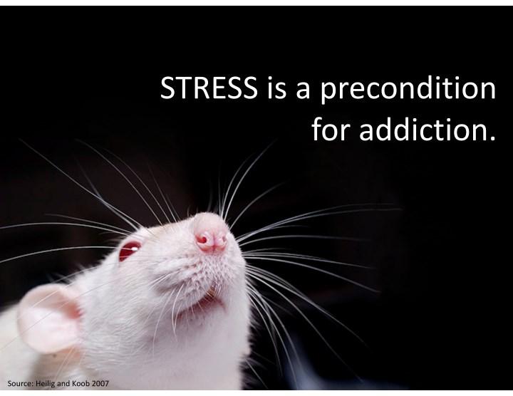 STRESSisaprecondition