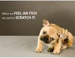whenwe feelanitch weseekto scratchit