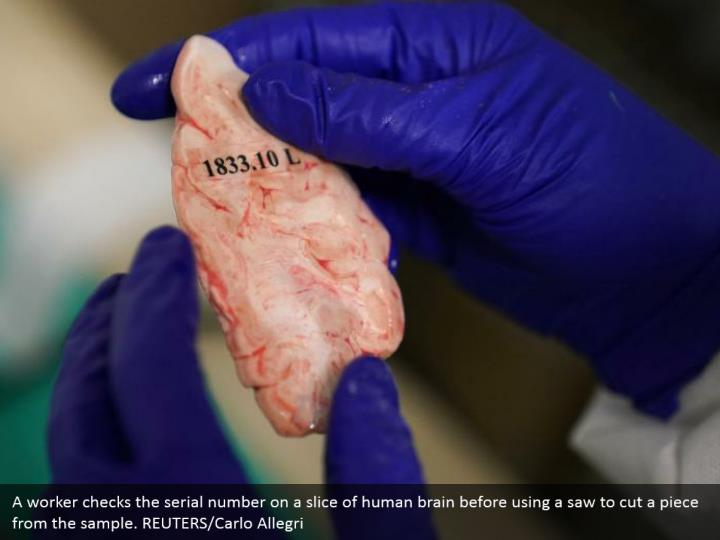 A worker checks the serial number on a slice of human brain before using a saw to cut a piece from the sample. REUTERS/Carlo Allegri