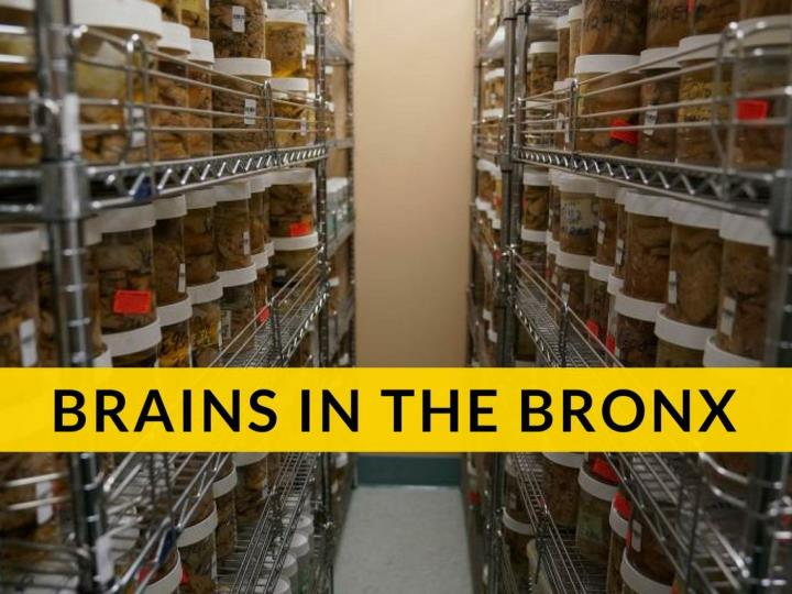 brains in the bronx n.