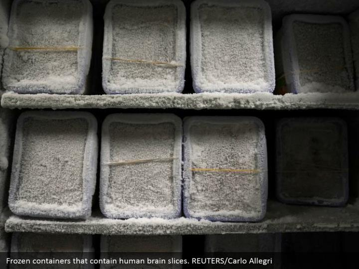 Frozen containers that contain human brain slices. REUTERS/Carlo Allegri