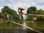 villagers use a makeshift bamboo bridge to move