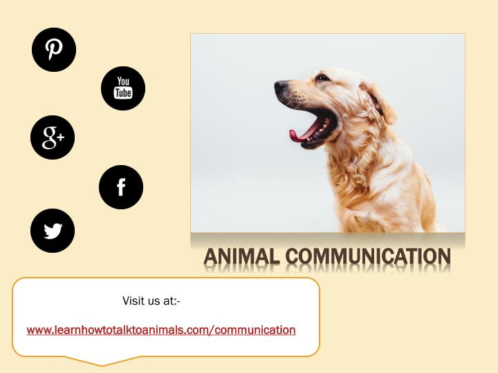 communication with animals a hobby for Download free nature powerpoint templates and themes you can use these nature ppt in your projects and presentations.