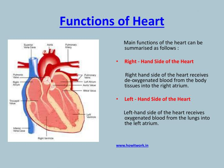 PPT - How does the human heart works? PowerPoint ...