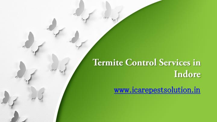 termite control services in indore n.