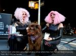 fashion week attendees pet a dog outside a venue