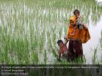 rohingya refugees walk through a paddy field 1